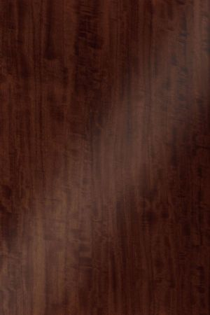DT 0039 Олива морёная